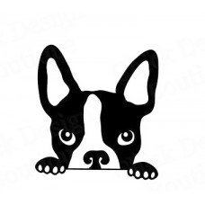 Cute Boston Terrier peeking out rear window #3